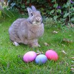 Easter toys recalled